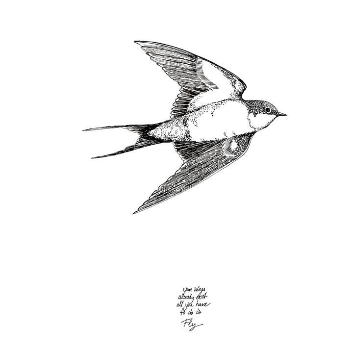 zwaluw fly