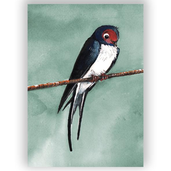 kleine zwaluw illustratie